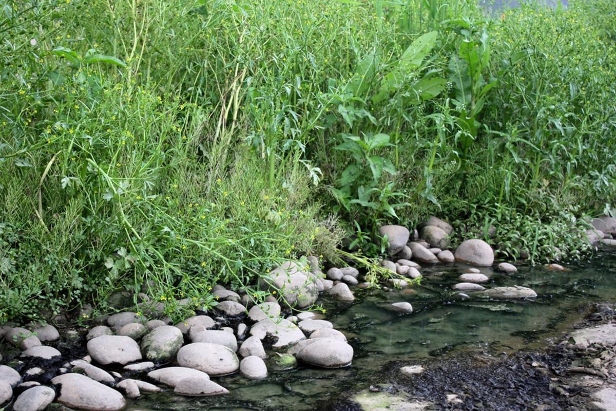 river-nature-study