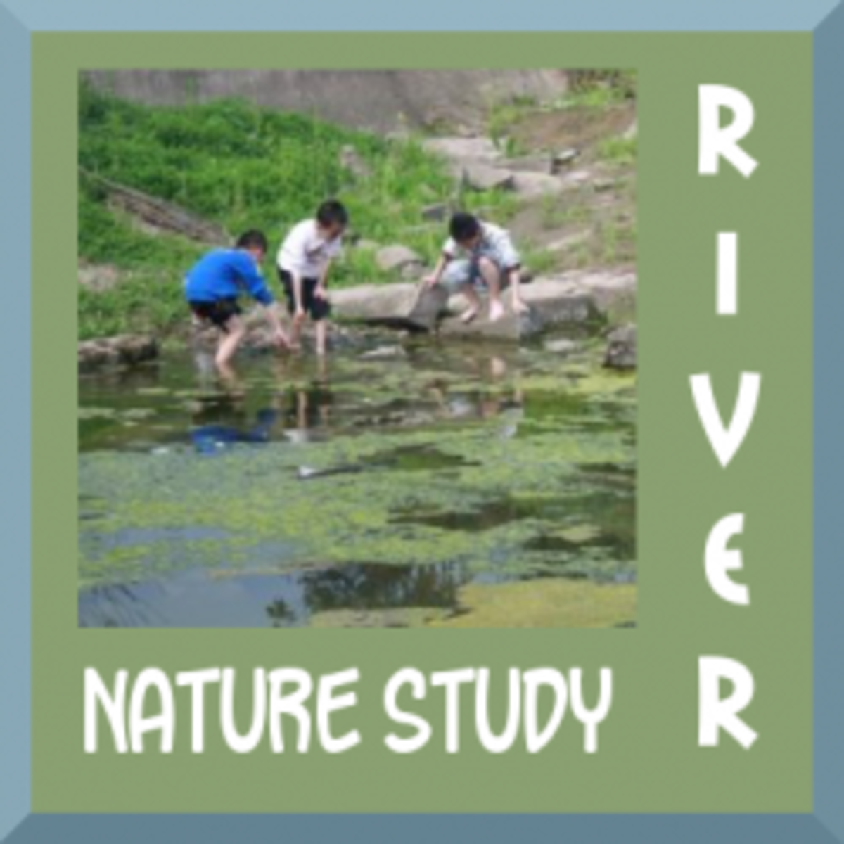 Nature Study at the River