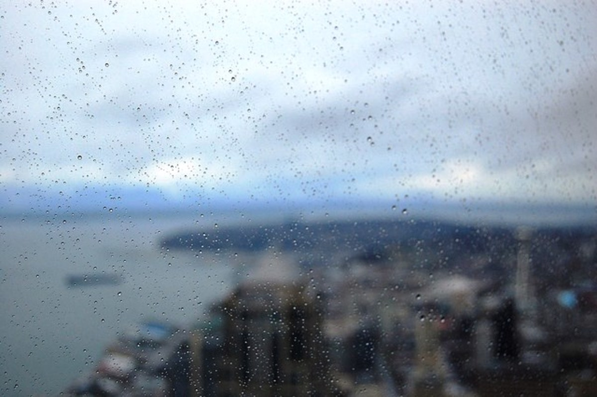 Rain on the Window in Seattle