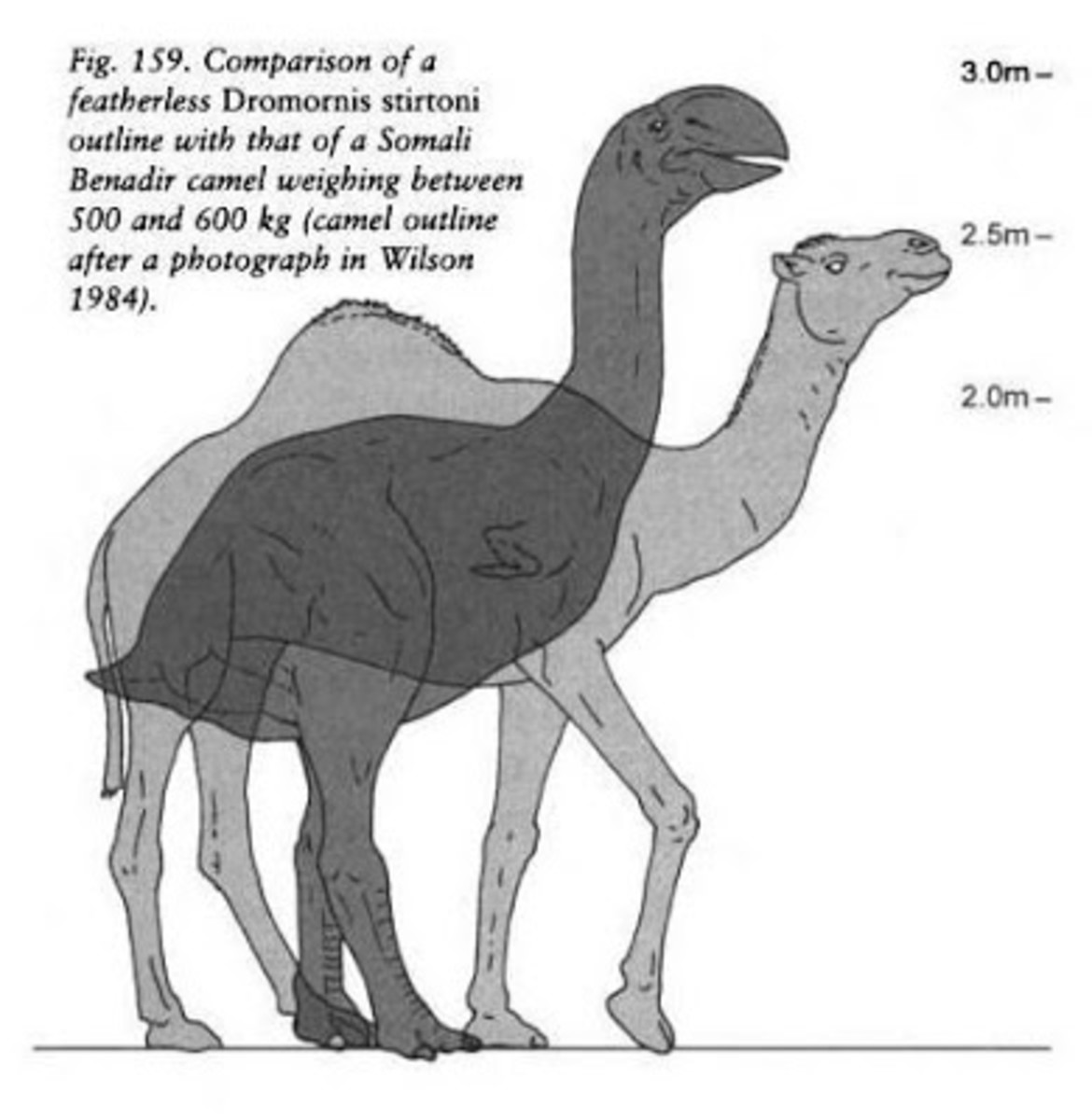 Demon Duck compared to a Camel