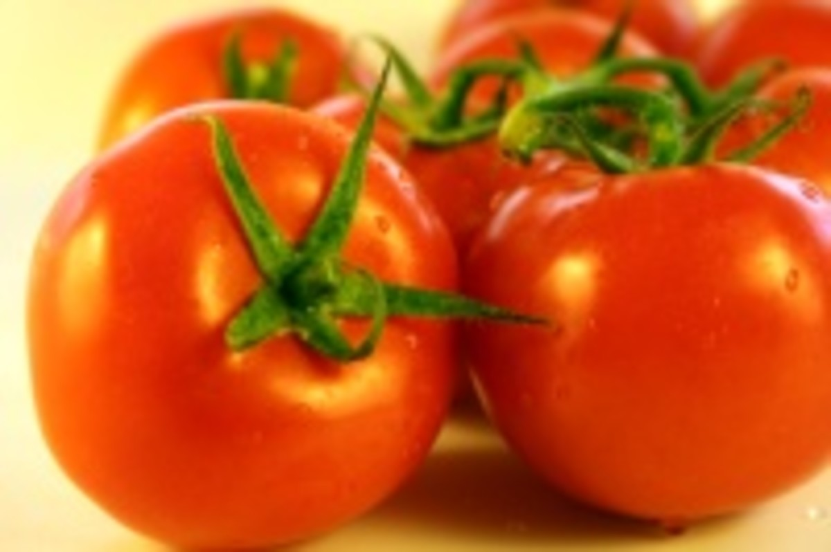 The benefits of growing moneymaker tomatoes and tomato plants