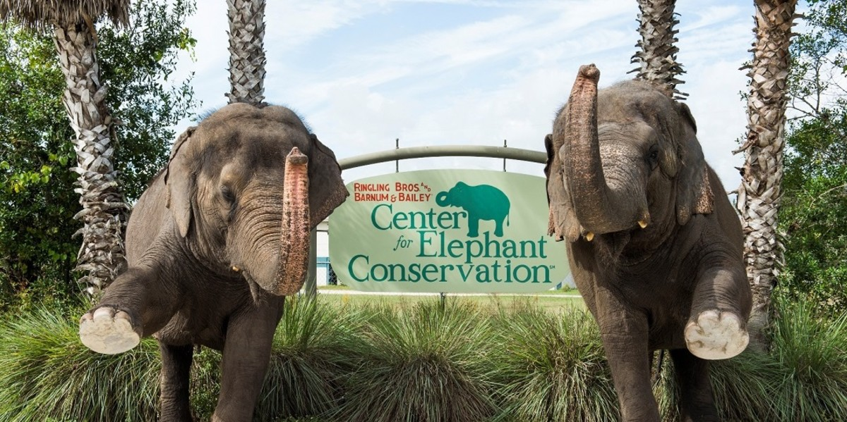 The Ringling Bros. and Barnum & Bailey Center for Elephant Conservation is the retirement place for their circus elephants