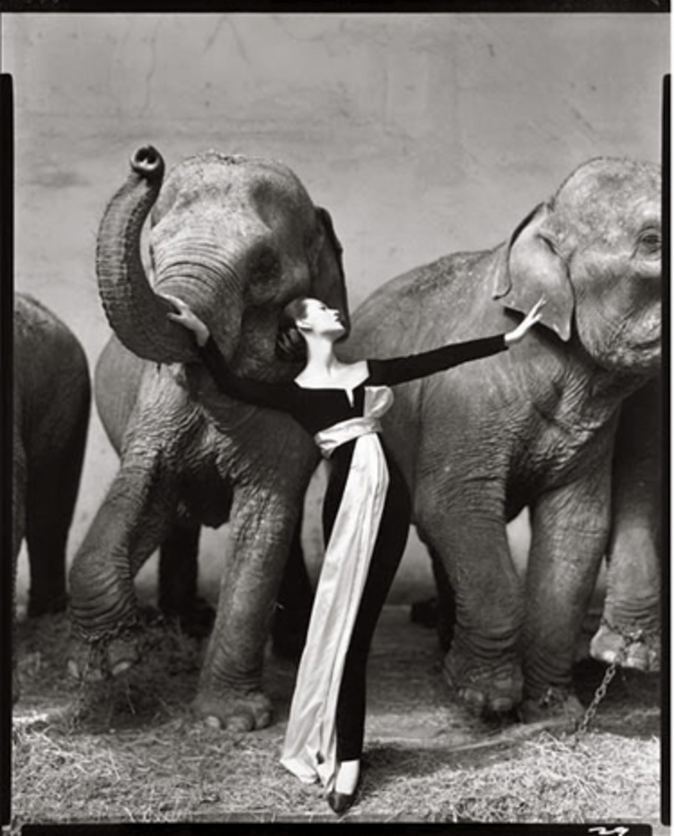 1955 Avedon photo of model Dovima with elephants.