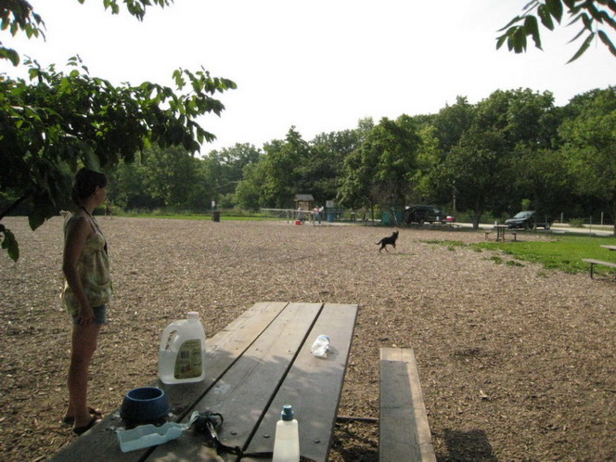 dog-parks-in-dupage-county-illinois