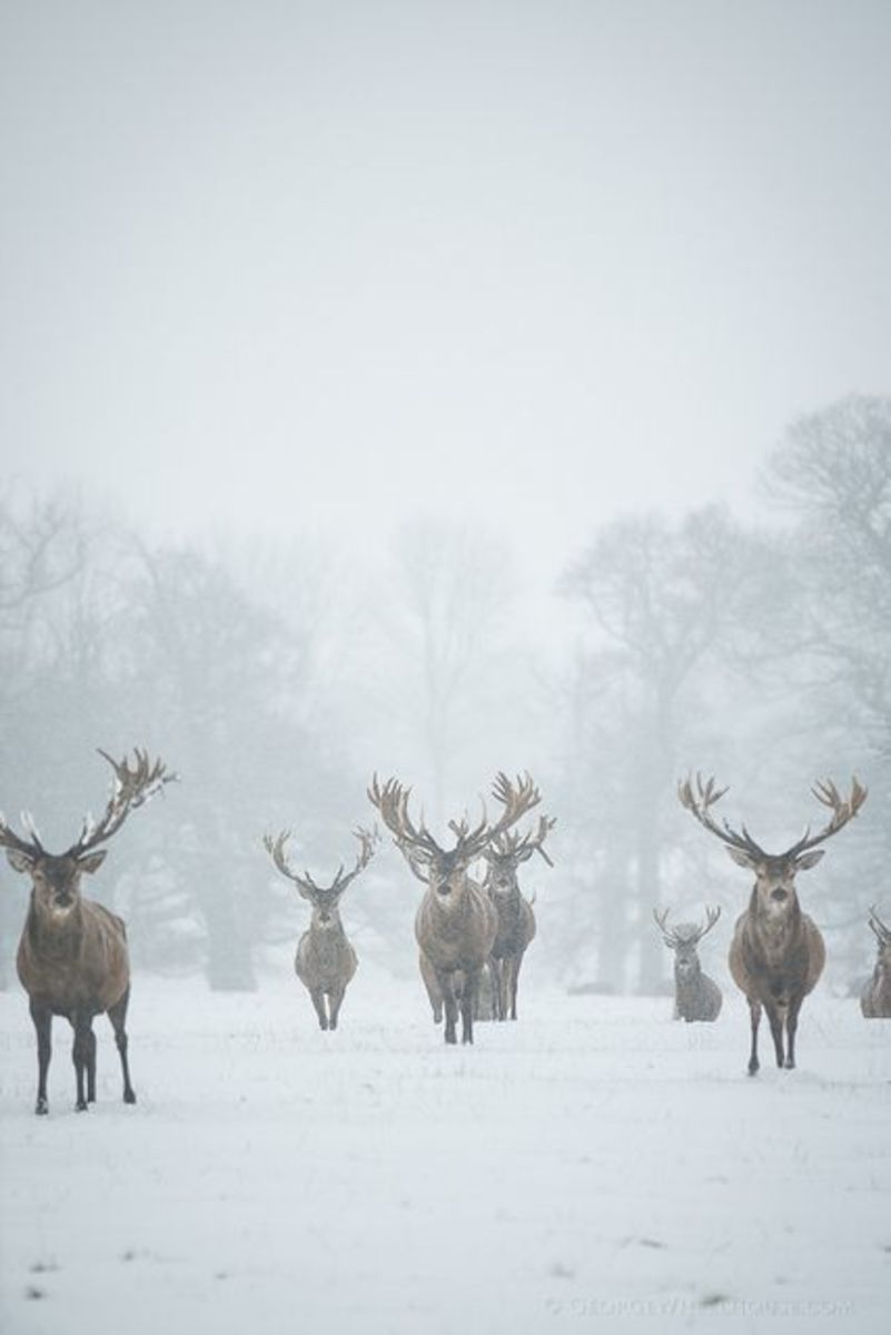 Huge Collection Of Big Buck Deer