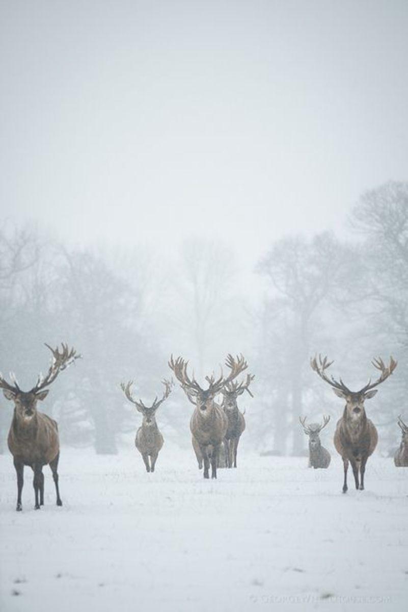 Huge Collection Of Big Buck Deer
