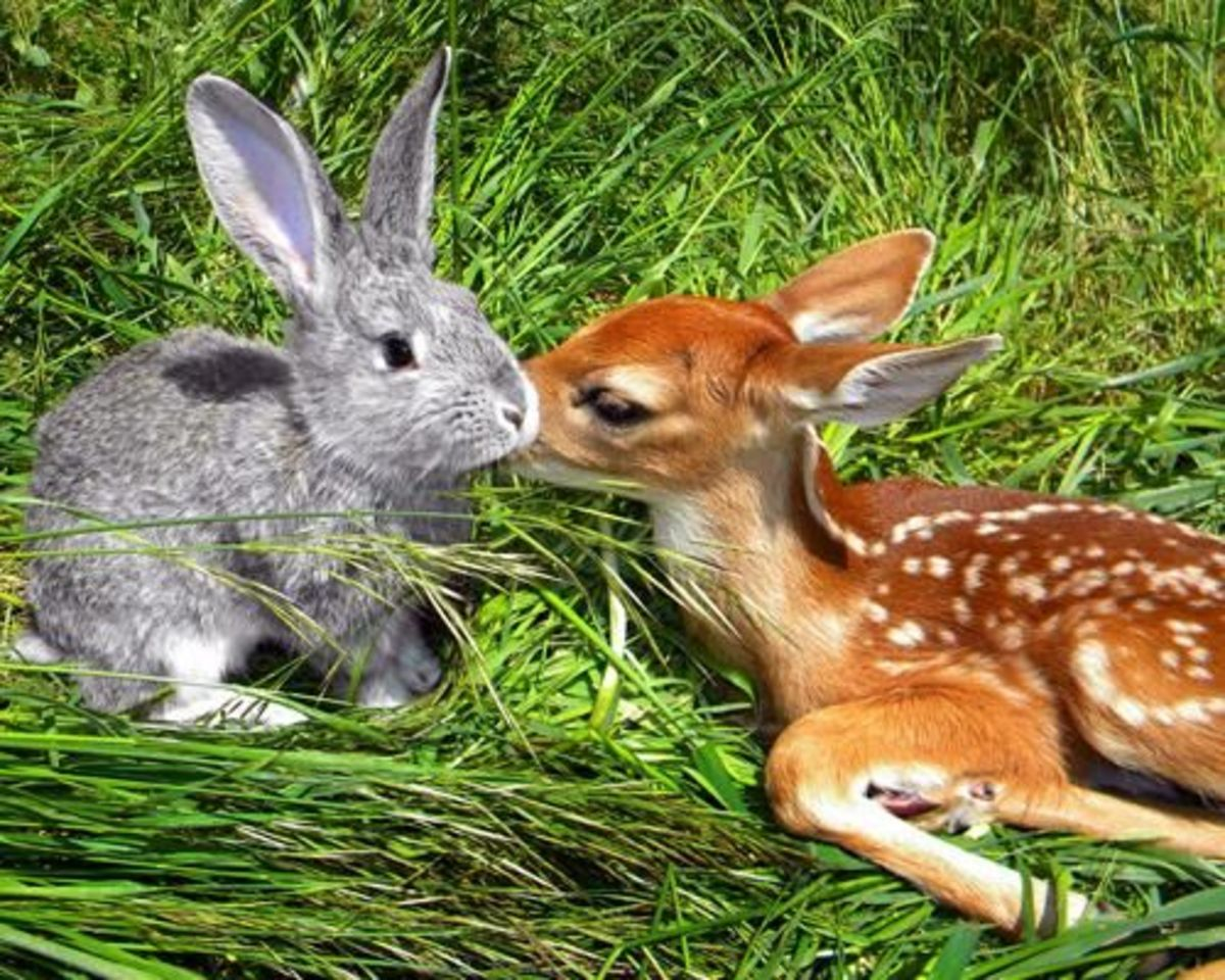 Bambi And Thumper. Aren't they so cute together.