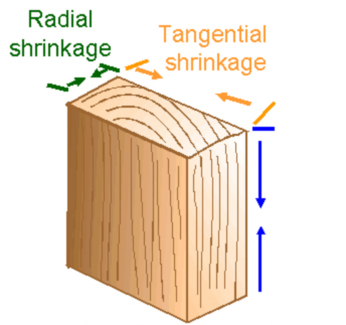 Tangential and Radial Shrinkage