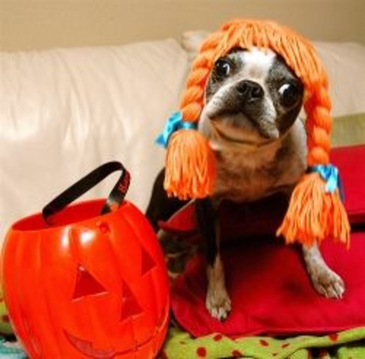 Halloween Dog photo by Don Hankins used under CC 2.0