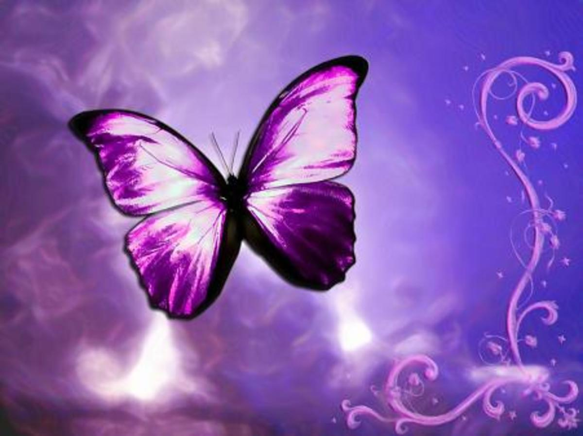 happy purple pink butterfly against a colorful background