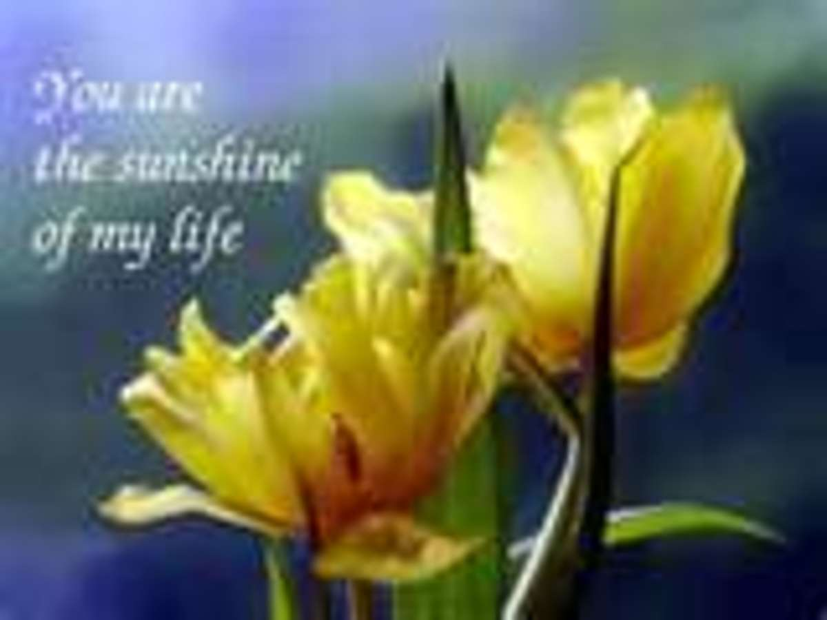 "Motivational Poster with Yellow Flowers ""You are the sunshine of my life"""