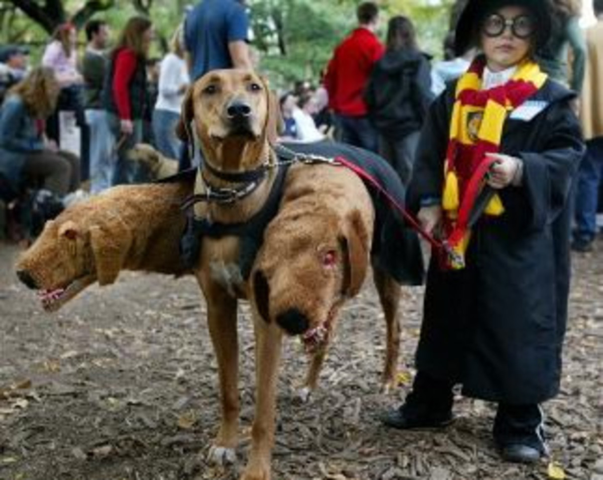 Harry Potter Fluffy Costume