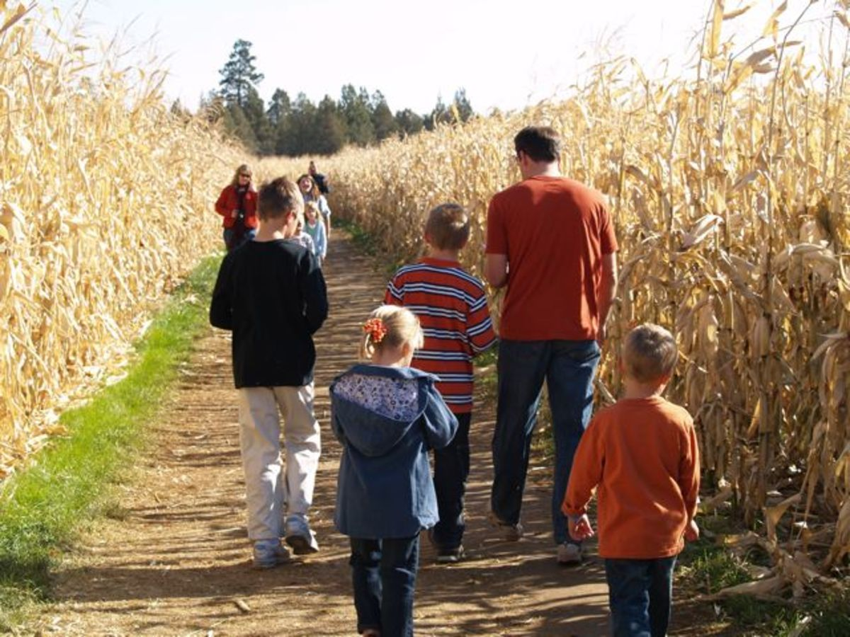 Heading into the corn maze at Central Oregon Pumpkin Co. (c) Stephanie Hicks