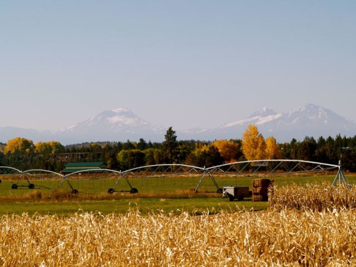 The Sisters Mountains over corn fields in Central Oregon (c) Stephanie Hicks