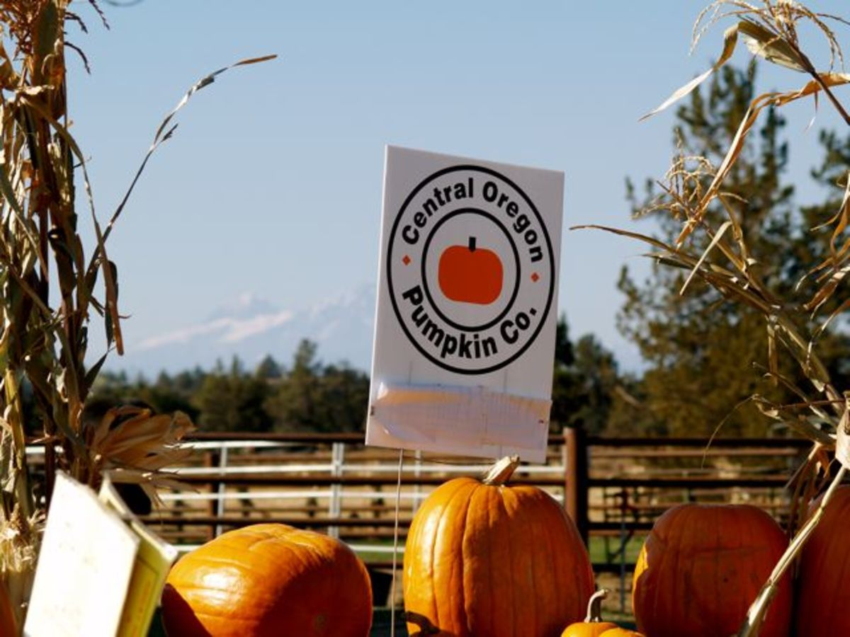 Pumpkin Patches in Central Oregon