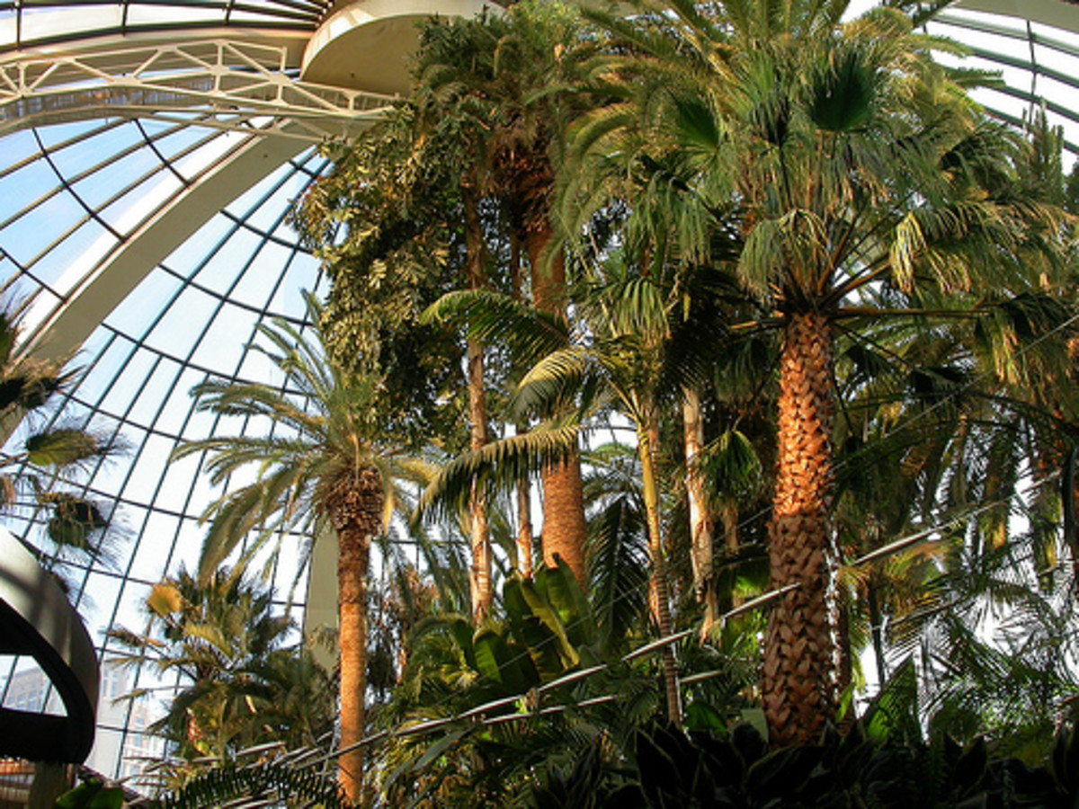Indoor Palm Trees - Vegas Style!