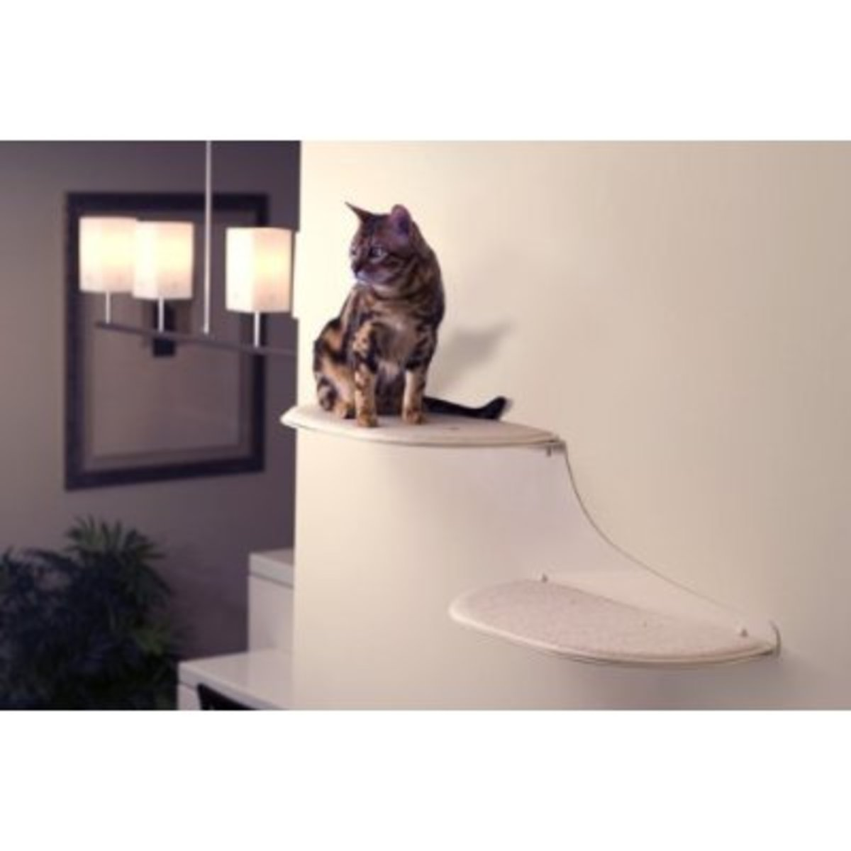 Cat shelves have become very modern and sleek!