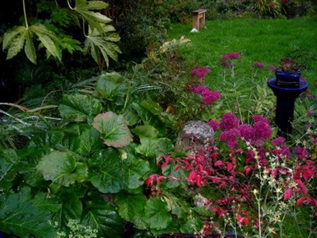 Autumn border with mixed plants