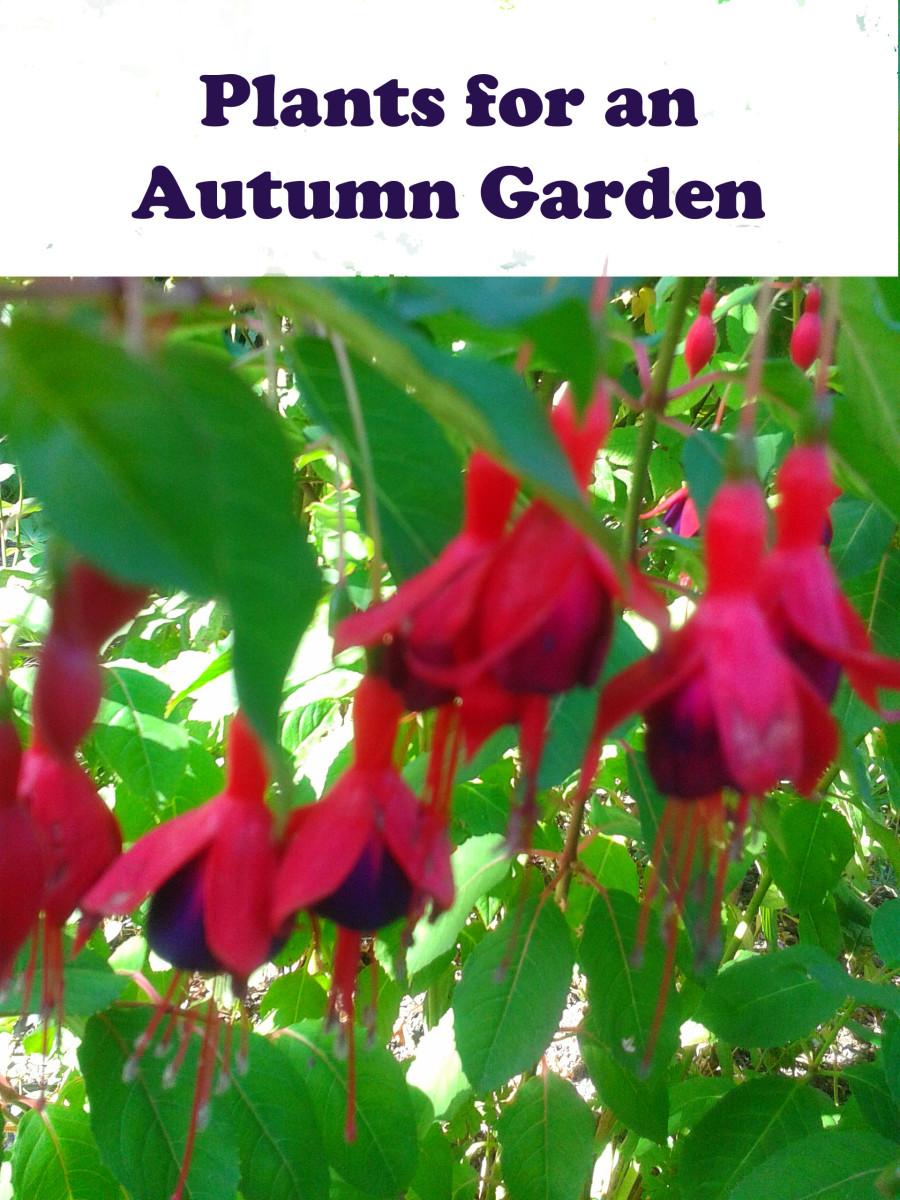 Plants for an Autumn Garden