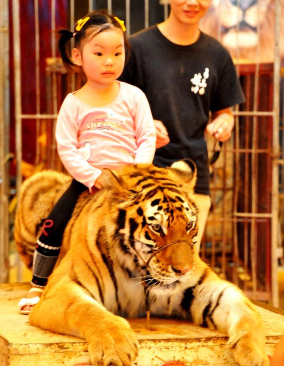 Cruel Chinese circus - unbelievable!