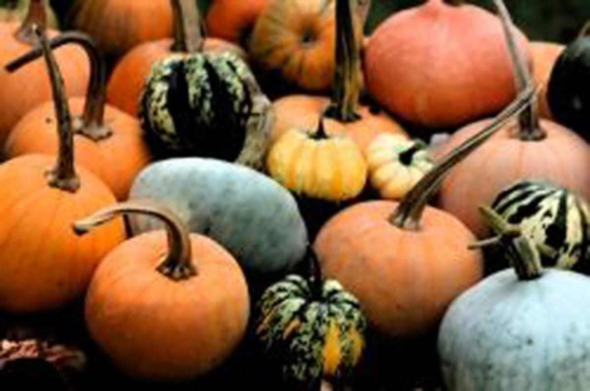 Halloween Pumpkin Spooky Night