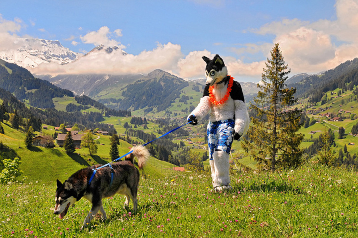 Husky fursuit