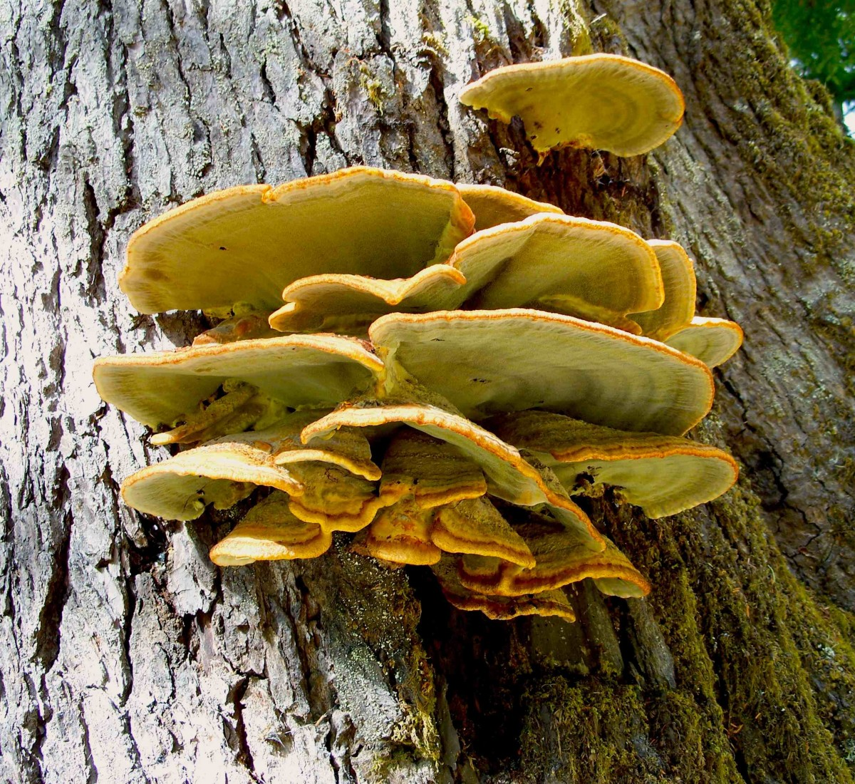 Fungus in the rain forest.
