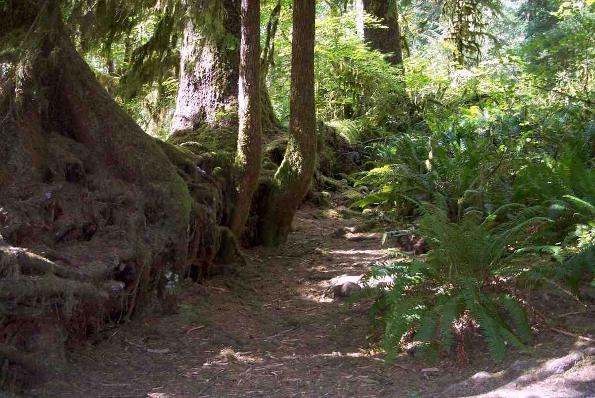 The Olympic National Park Rain Forest