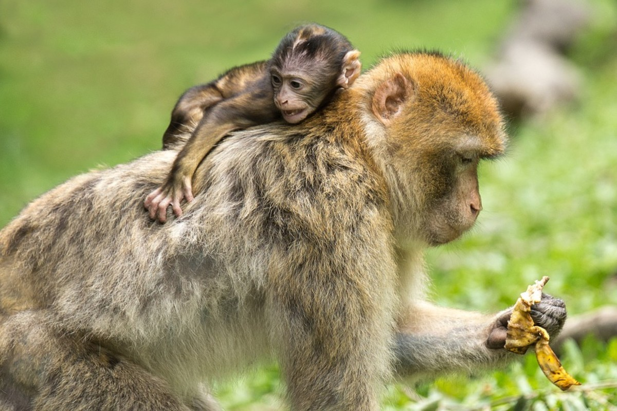 That's the problem with a monkey on your back! They are always there.