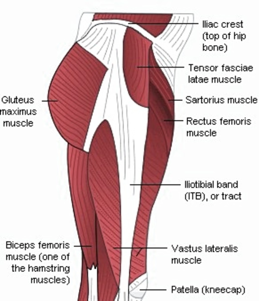 target tone buttocks with aquatic frog legs full exercise review  : gluteal muscle diagram - findchart.co