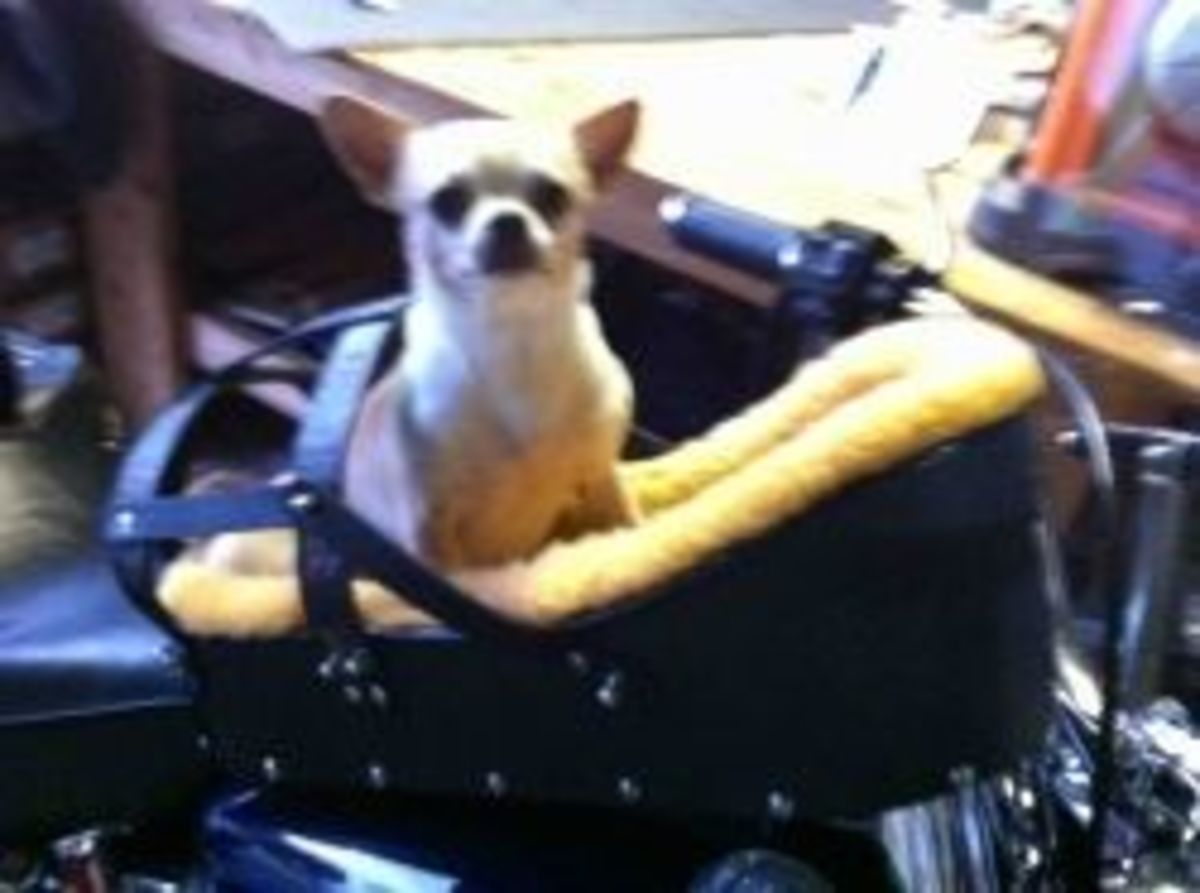 This is Hemi ... Boo Boo's Friend