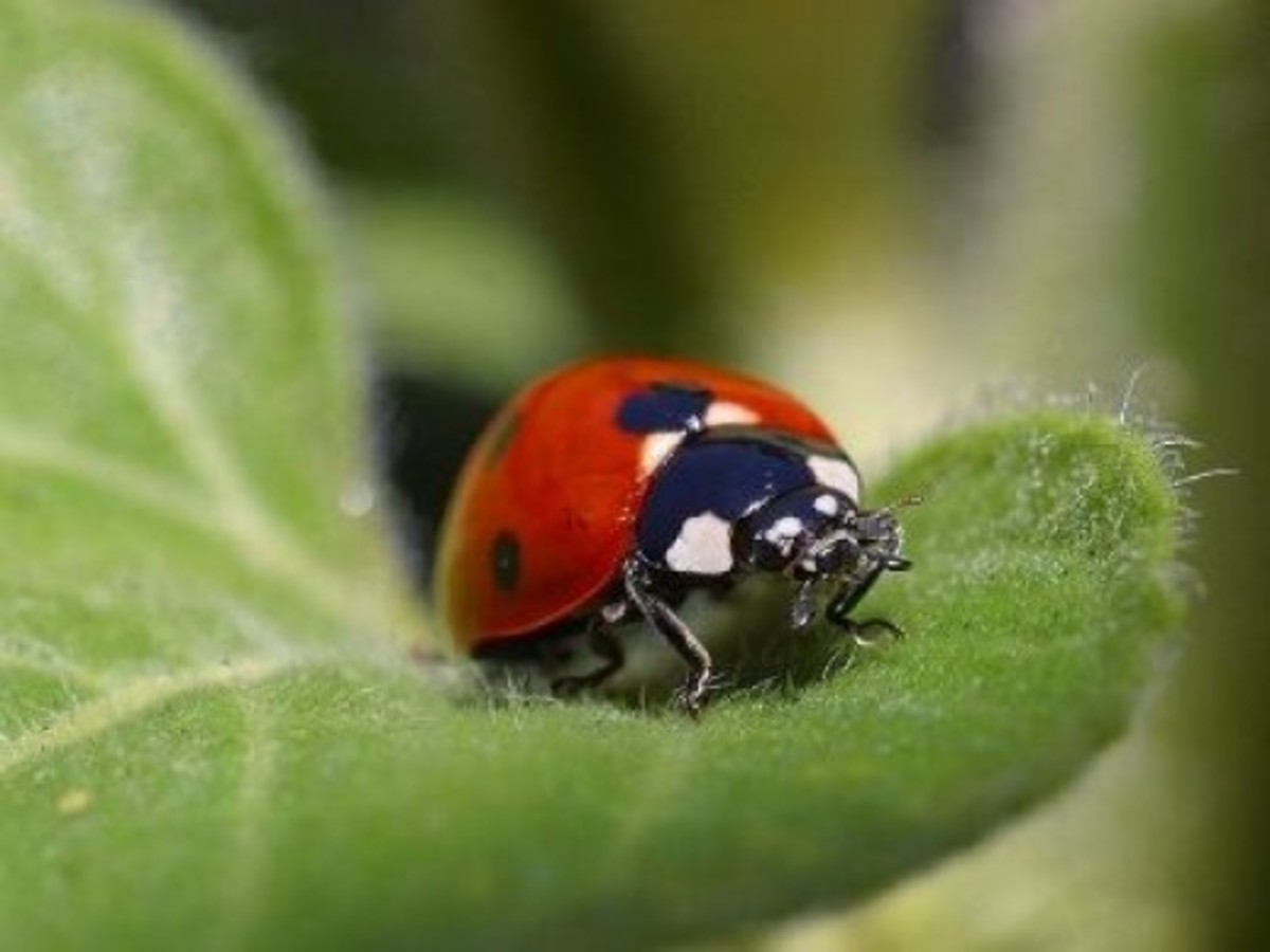 Hey Ladybug, Let Me Count Your Spots