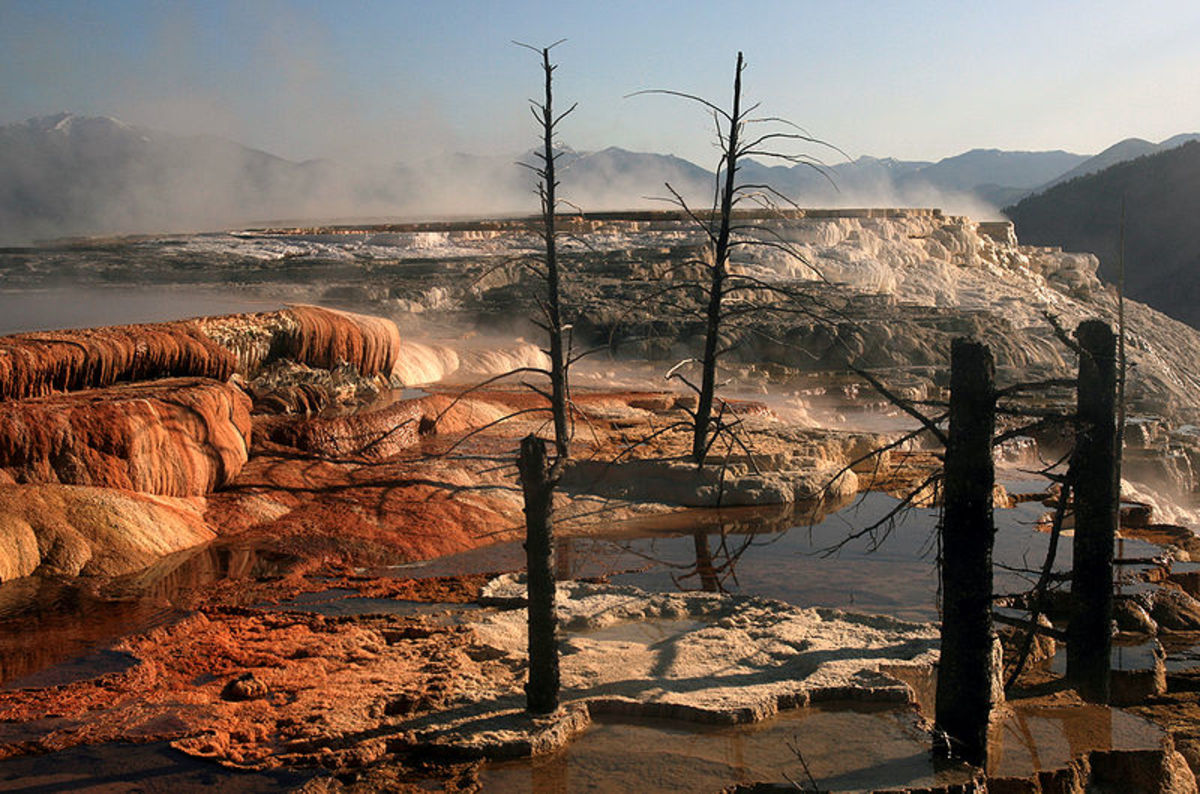 Dead Trees at Mammothe Hot Springs, Yellowstone National Park