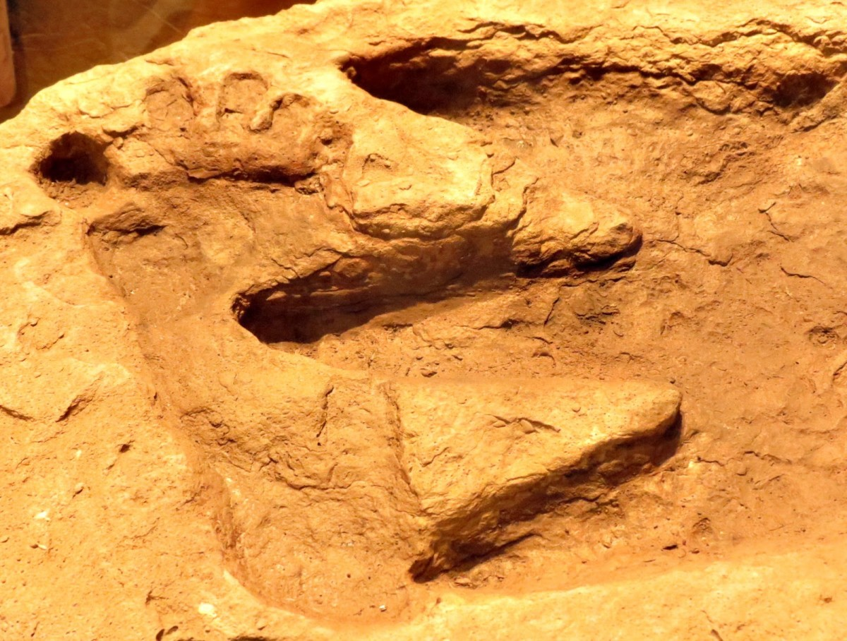 This is a picture of a human footprint overlapping a dinosaur track, dating from the same era.