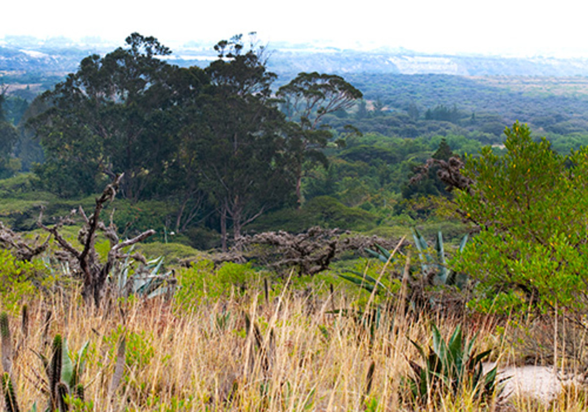 Parque Jerusalem – Dry Forest of the Ecuador Highlands