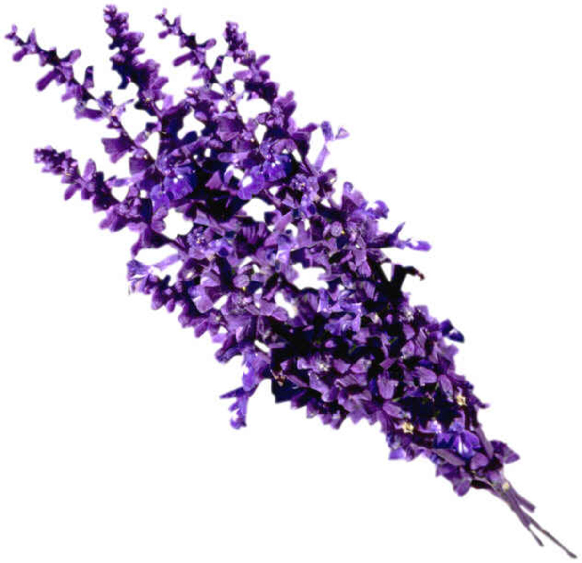 Top 10 Best Lavender based Perfumes or Fragrances for Men