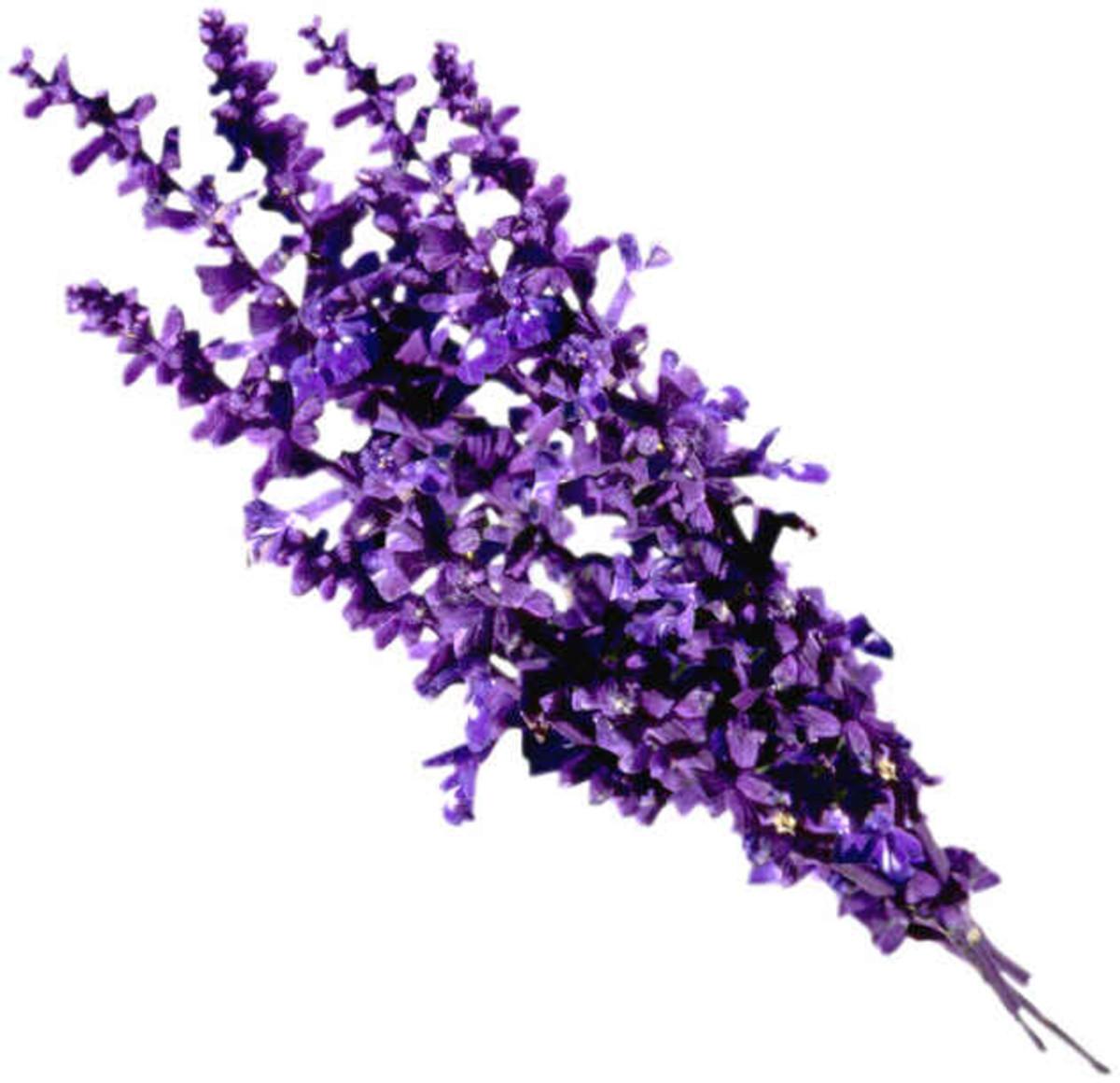 Top 10 Lavender Perfumes for Men - Best Fragrances for Males