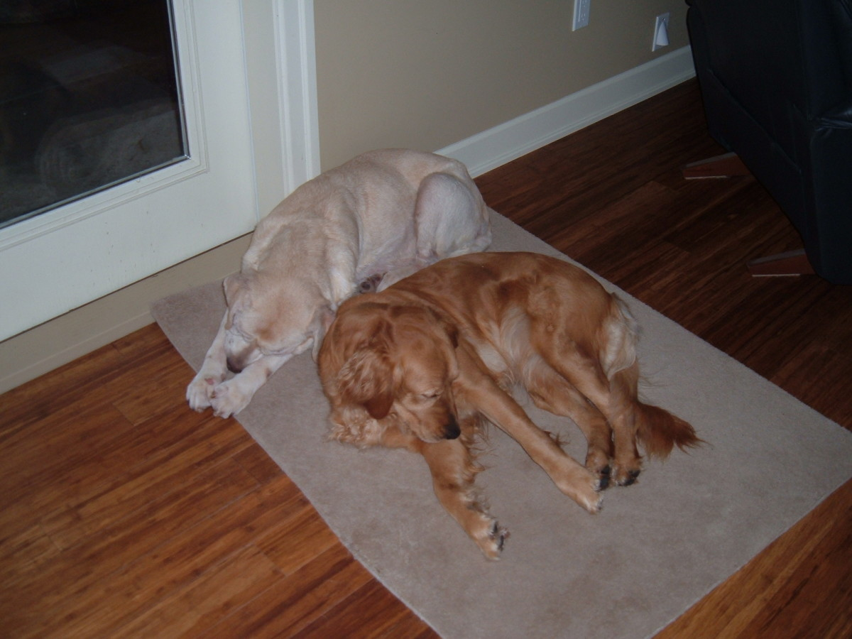 vicious guard dogs :)