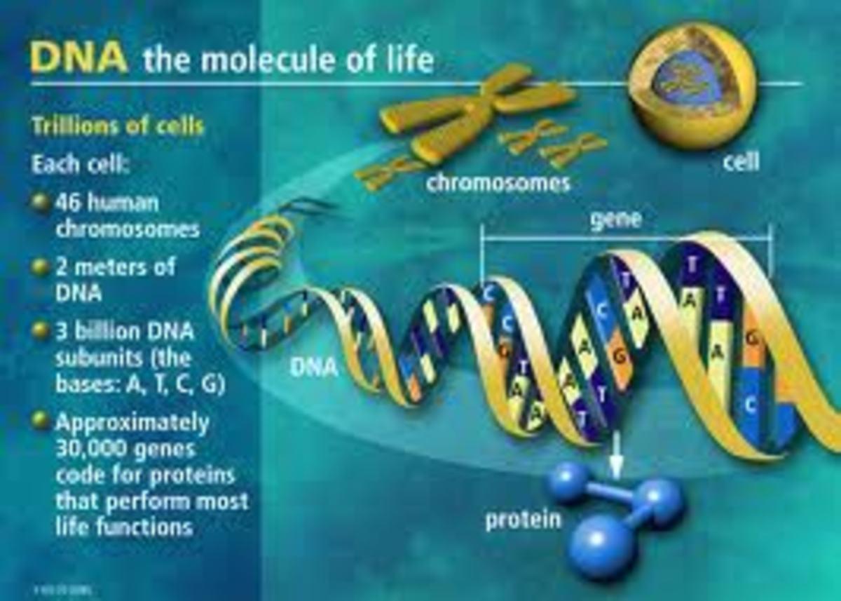 Understanding DNA the molecule of life