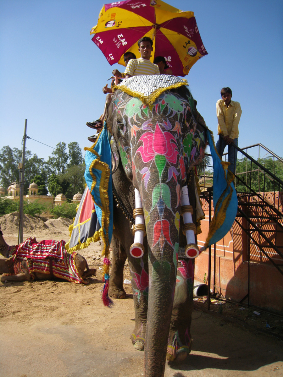 Dera Amer offers visitors the chance to go on a safari on the back of an elephant