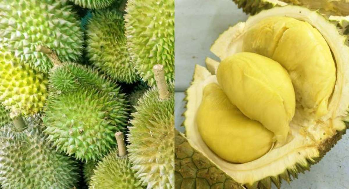 """Durian is also known as the """"king of fruits."""""""