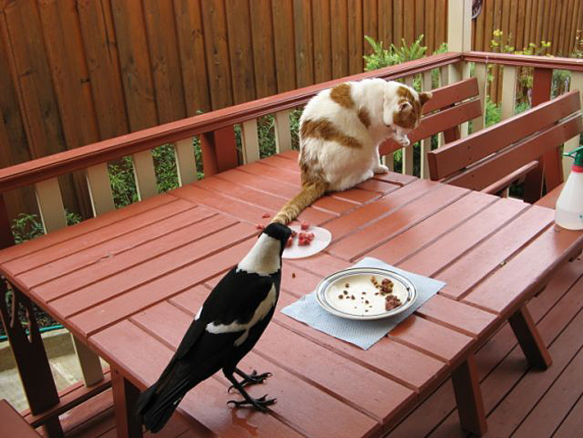 Dumbo (Magpie) and Taeko enjoying afternoon tea :)