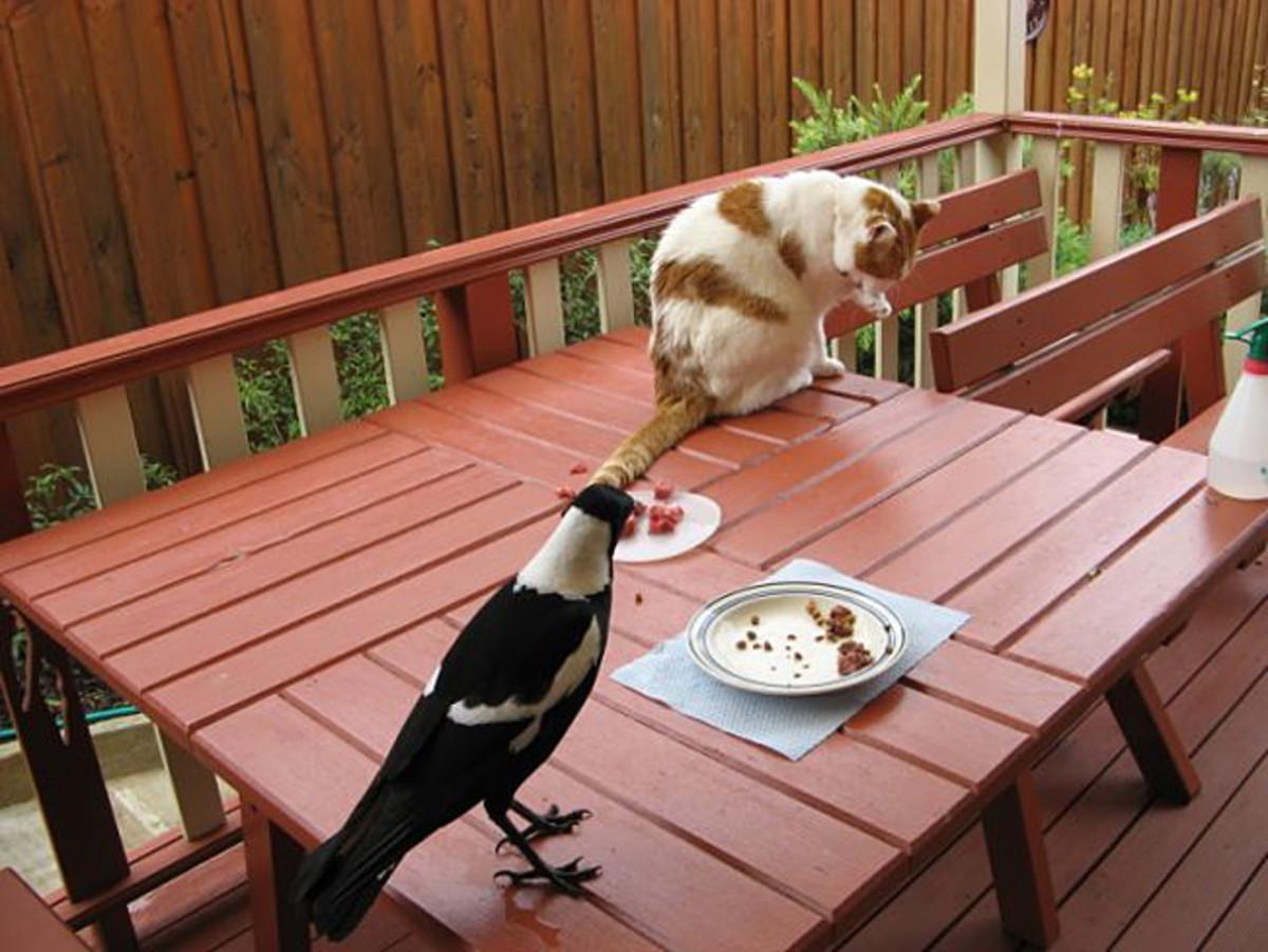 Dumbo (Magpie) and Taeko enjoying afternoon tea :)
