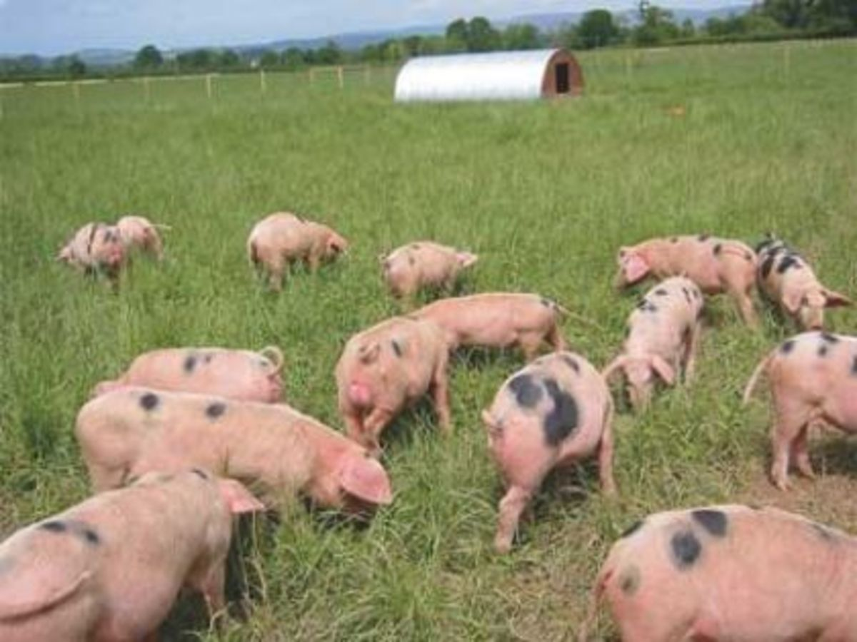 This is what most think is farm life for animals, but the real picture today is far different.