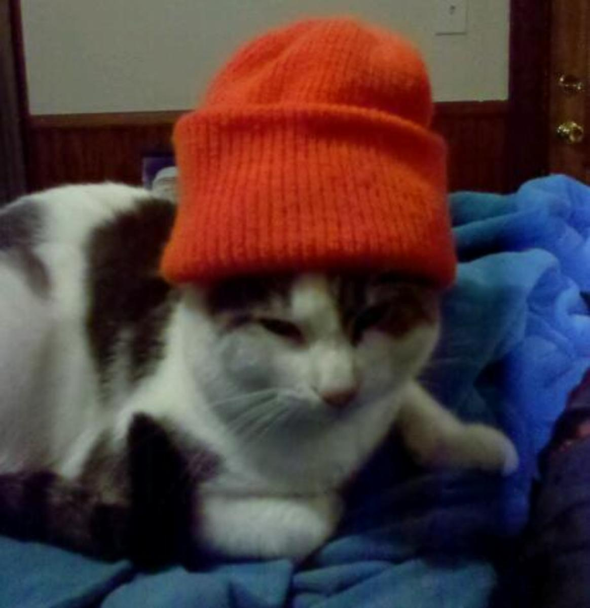 Soda Pop wearing a hunting hat; not impressed!