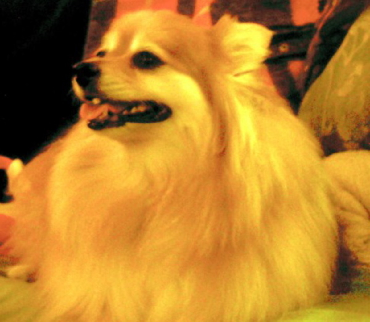 Best Dog Breeds For Elderly People Hubpages