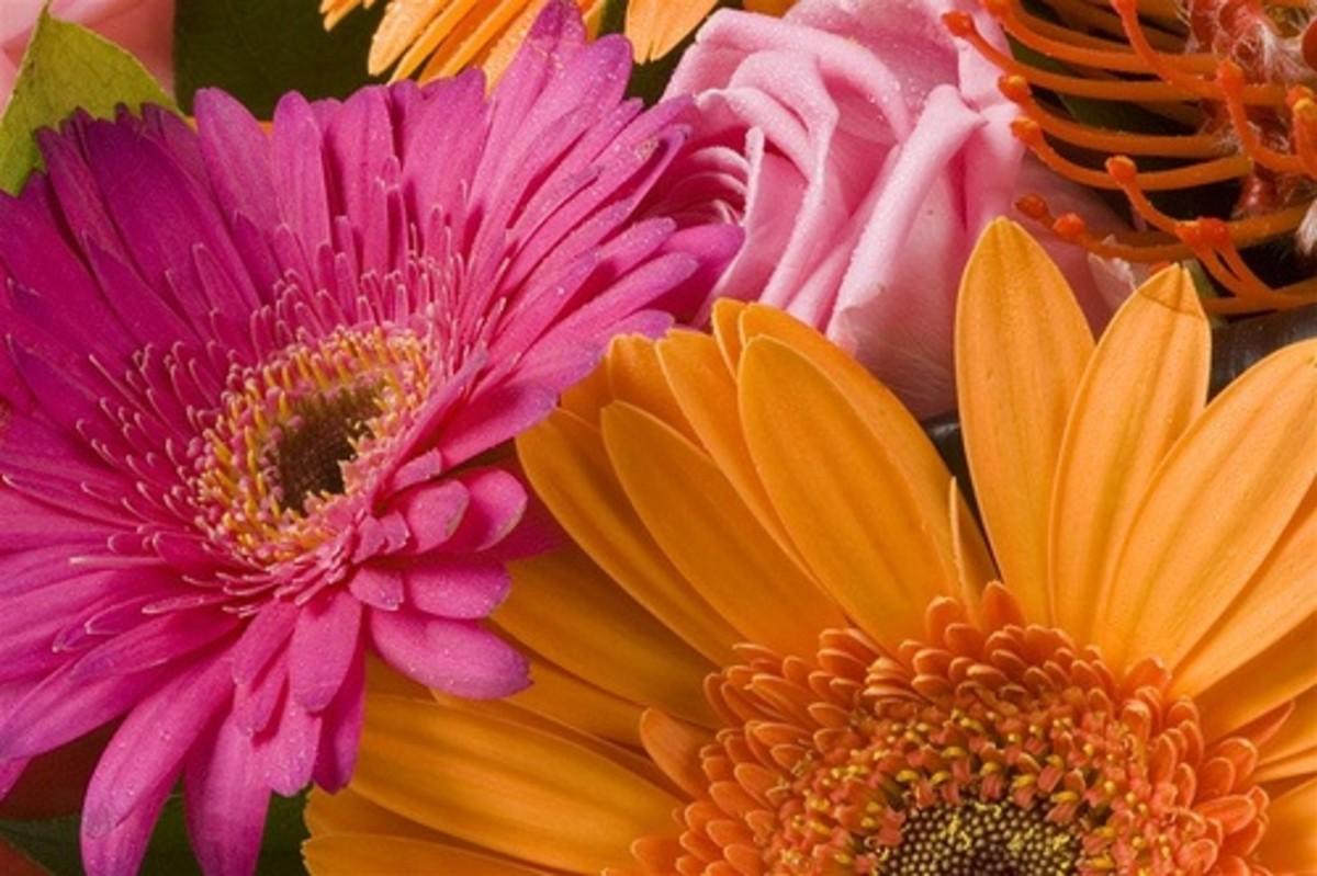 Macro Flowers full view