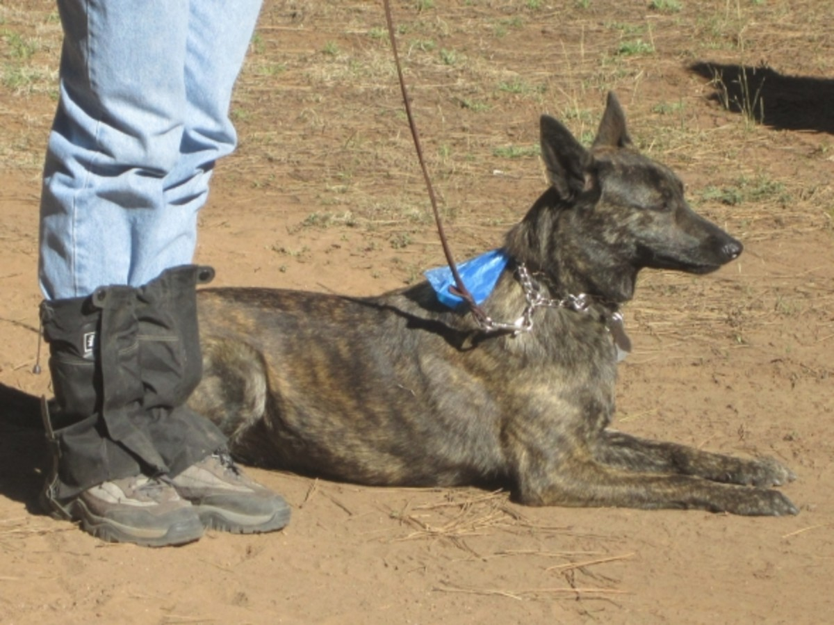 K9 Search and Rescue