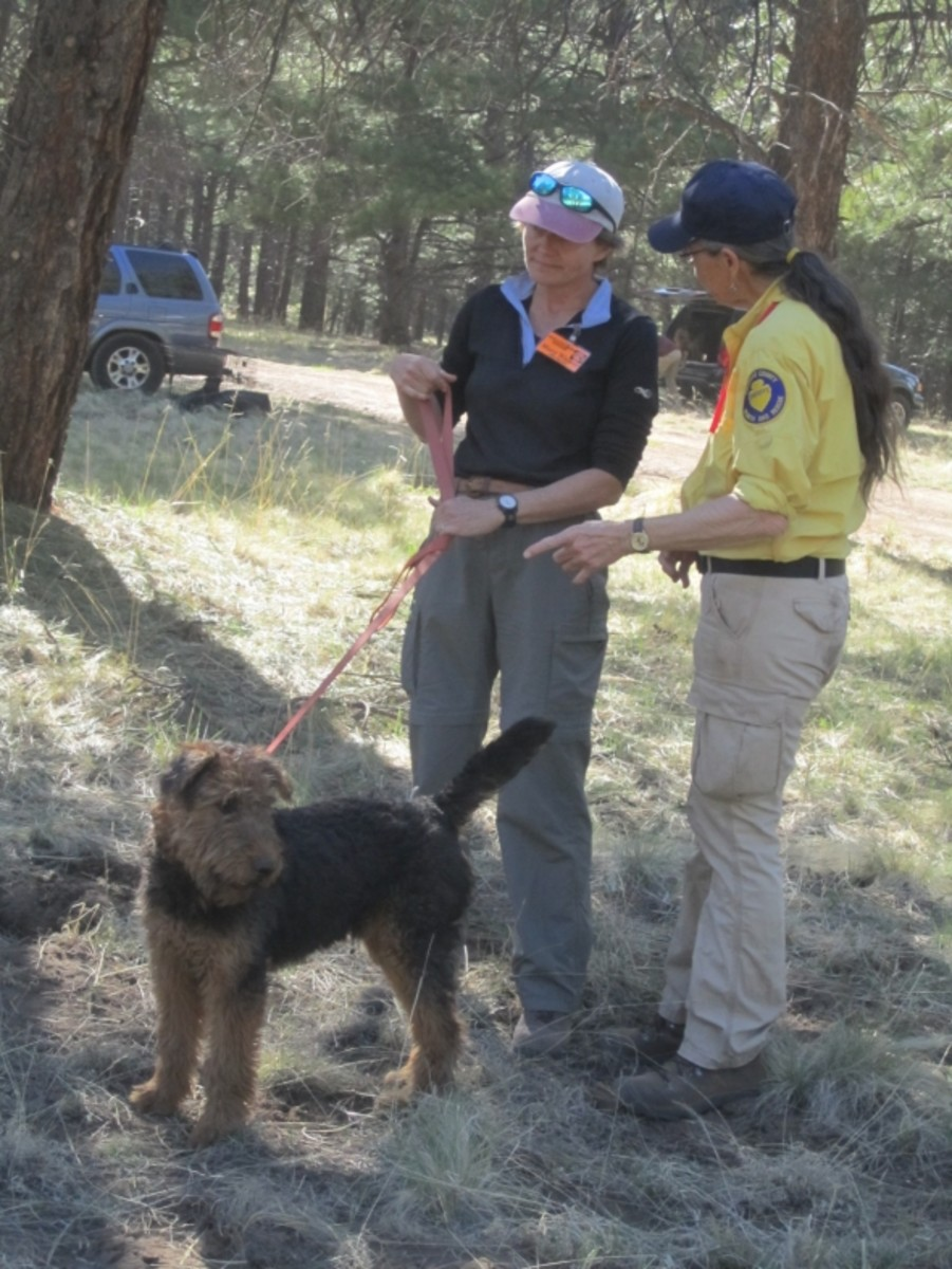 The Annual Arizona K9 Search and Rescue Conference | HubPages