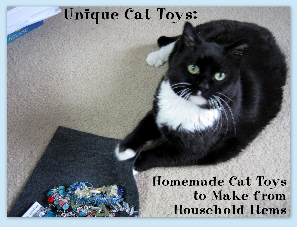 Fun Cat Toys : Unique cat toys homemade to make from household
